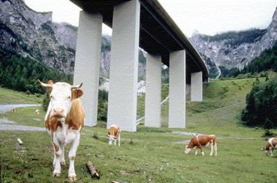 Foto: Gesellschaft für Ökologische Forschung