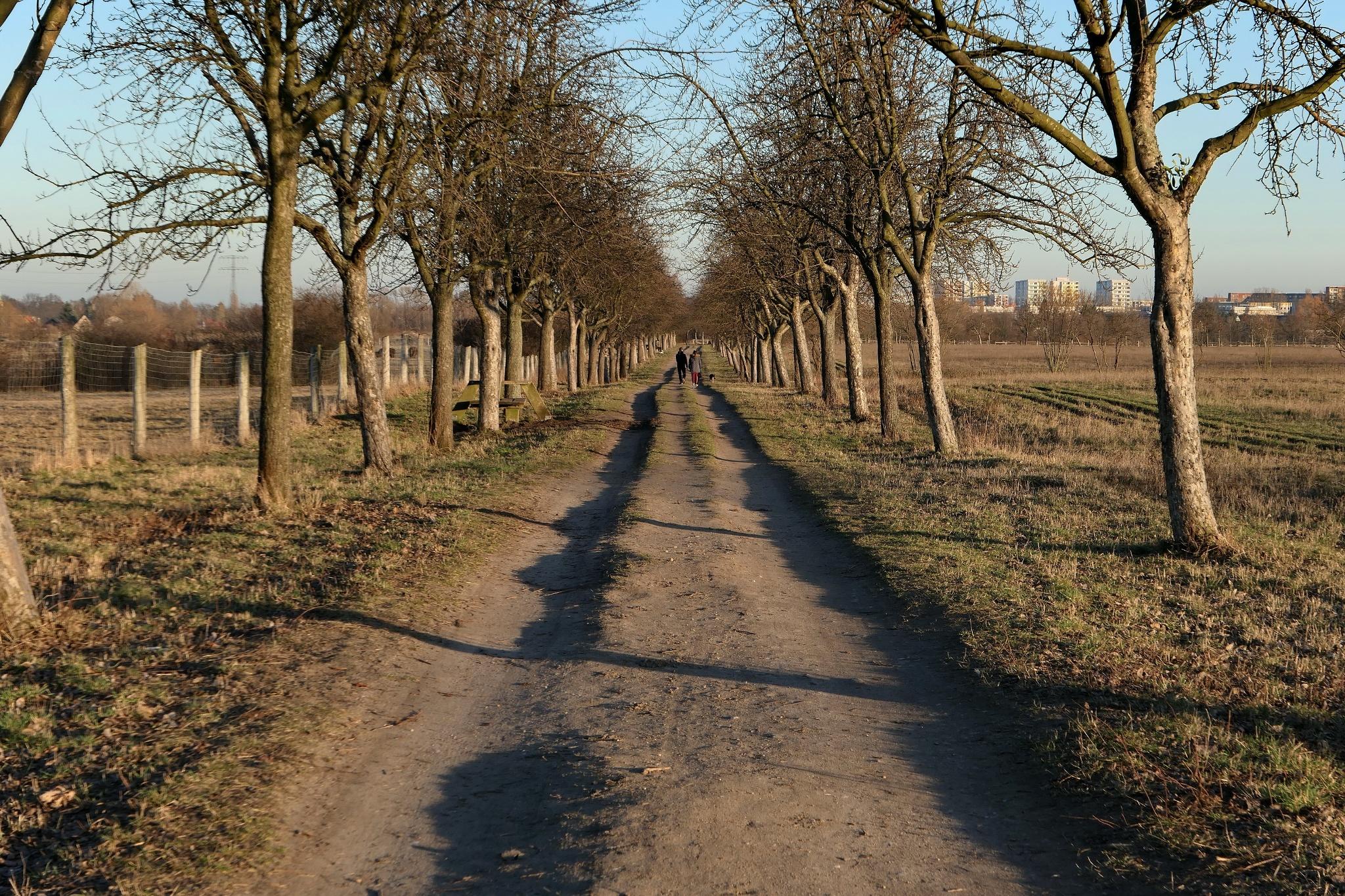 Wiesen vor Ahrensfelde Foto: U. Preugschat